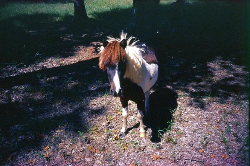Hipster Pony